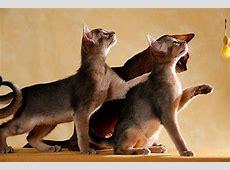 Lustige Katzenbilder mit witzigen Sprüchen zum Lachen