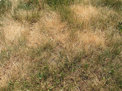 Vertrockneten Rasen Retten by Verbrannter Rasen Das K 246 Nnen Sie Tun Um Ihn Zu Retten