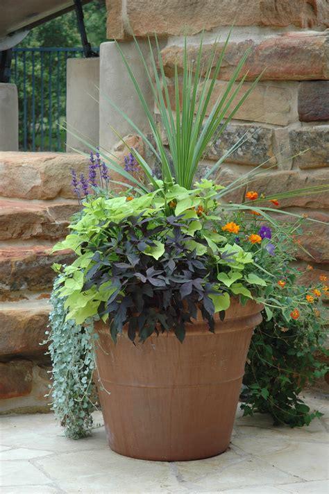 potted plants in garden urban garden guide container gardening urban garden guide