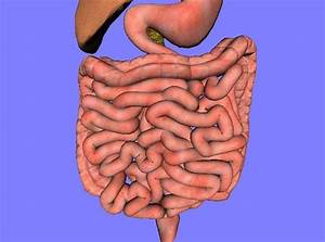 25 Fun Facts About The Human Digestive System You Probably