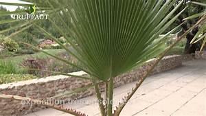 Quand Planter Du Muguet : planter des hortensias en pleine terre semis en pleine terre au printemps 3 conditions pour les ~ Melissatoandfro.com Idées de Décoration