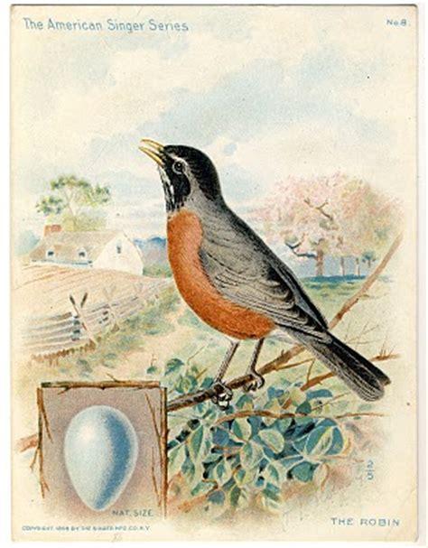 beautiful large bird  egg graphic robin