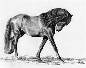 Drawing Horse of Pencil Sketch