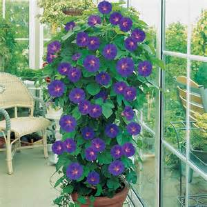 plante en pot cr 233 er un jardin avec des plantes en pot