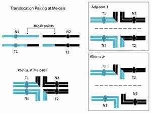 9.2: Changes in Chromosome Structure - Biology LibreTexts