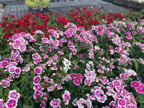abc plant nursery  garden center