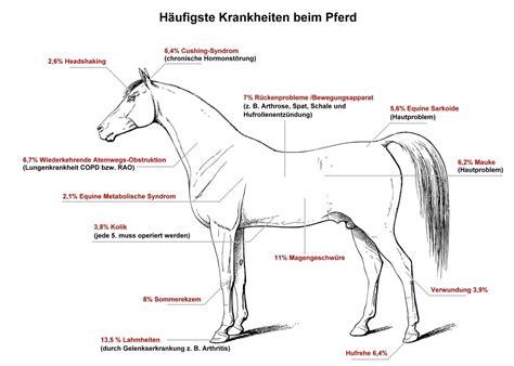 kosten tierarzt pferd kfz versicherung