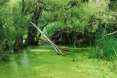 Freshwater Pond Algae Types