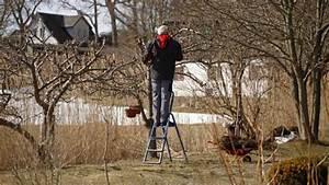 Gartenarbeit Im Februar : els a metsz s ~ Frokenaadalensverden.com Haus und Dekorationen