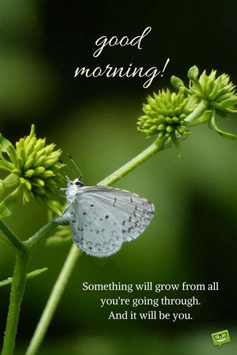 good morning picture  pinterest  butterfly  quote