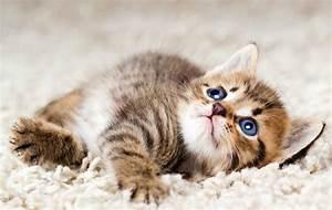 wo, finde, ich, so, eine, babykatze, , , katze, , katzen