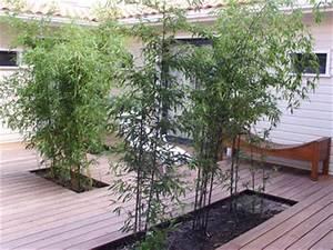 Bambou En Pot Pour Terrasse : bambou terrasse dikke houten balken ~ Louise-bijoux.com Idées de Décoration