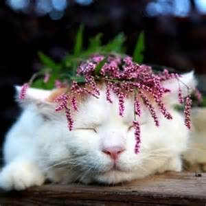 Cat with Flower Crown