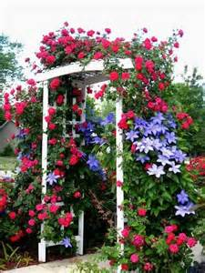 Clematis and Climbing Roses Arbor