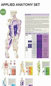 S     Movementmantra Com  Product  Secret   Anatomy Poster