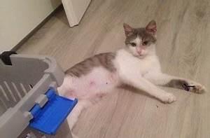 Katzen In Mietwohnung 2016 : wir stellen uns vor katzennot schw bische alb ~ Lizthompson.info Haus und Dekorationen