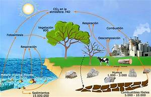 Ciclo Del Carbono - Ciencias Naturales 2 U00b0 Bto