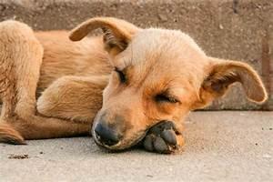 Bodenbelag Für Hunde Geeignet : rundwurmbefall unangenehm nicht nur f r hunde mydog365 ~ Lizthompson.info Haus und Dekorationen