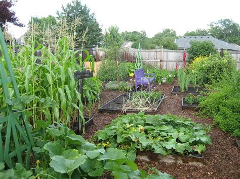 pictures of backyard vegetable gardens in times of an apocalypse would you starve or just eat canned meat page 3