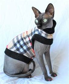 sphynx cat price sphynx cat find out about with a hairless cat breed