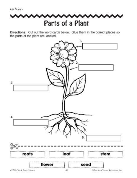 Flower Parts Worksheets