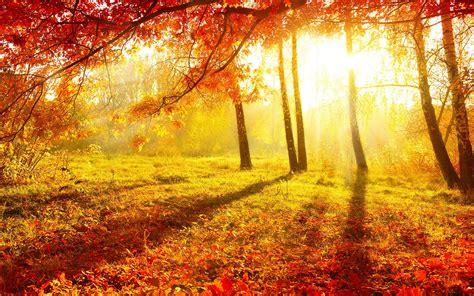 Hd Autumn Background by Autumn Forest Wallpaper For Desktop Pixelstalk Net