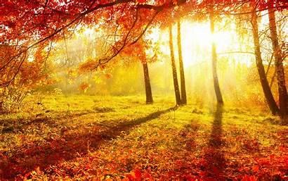 Forest Autumn Background Fall Sonbahar Nature Autumnal