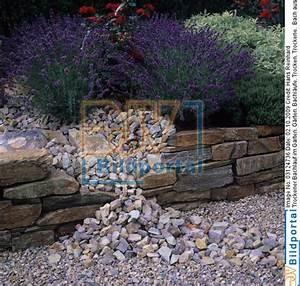 Bachlauf Im Garten : details zu 0003124736 trockener bachlauf im garten djv bildportal ~ Pilothousefishingboats.com Haus und Dekorationen