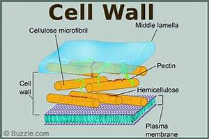The Fascinating World of Cell Organelles and Their Functions