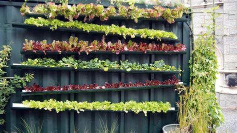 vertical aeroponic farming healthy food   planet