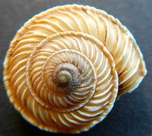 Fibonacci Sequence: a collection of ideas to try about ...
