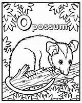 Possum Coloring Pages Opossum Phish Cake Printable Feed Need Cakecentral Books Getcolorings Opposum Roads sketch template