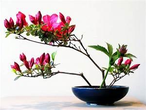 Ikebana Beautiful is born! • Ikebana Beautiful