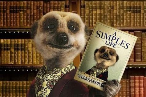 Meerkats To Be Axed From Compare The Market Adverts