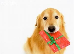 Golden Retriever Christmas Wallpaper - WallpaperSafari