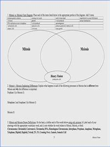 Wiring Diagram  26 Mitosis Vs Meiosis Venn Diagram Answers