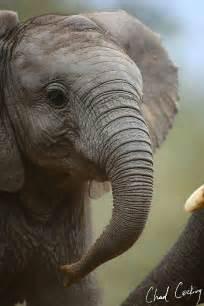 Elephant Baby Animals