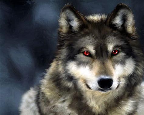 Alpha Wolf Wolf Wallpaper by Wolf Wolves Wallpaper 32863738 Fanpop