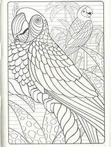 Coloring Parrot Artwork Abstract Eating Clean Drawings Crock Meals Sketches Pot Healthy sketch template