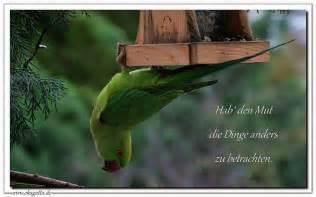 zen sprüche quot hab den mut die dinge anders zu betrachten quot zen meditation achtsamkeit zitate