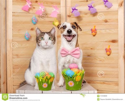 Happy Wallpaper Cats And Dogs by Happy And Cat With Easter Eggs Stock Image Image Of