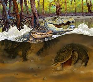 Three New Prehistoric Caiman Species Found in Peruvian ...