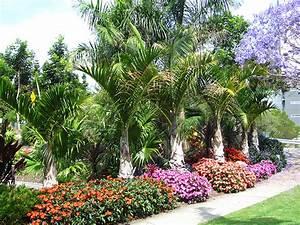 Hyophorbe verschaffeltii (Spindle Palm) - native to ...