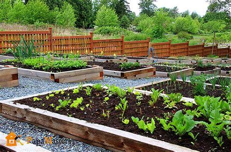 starting a veggie patch грядки на дачном участке фото