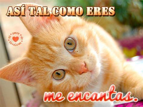imagen de lindo gatito con frase de frases de