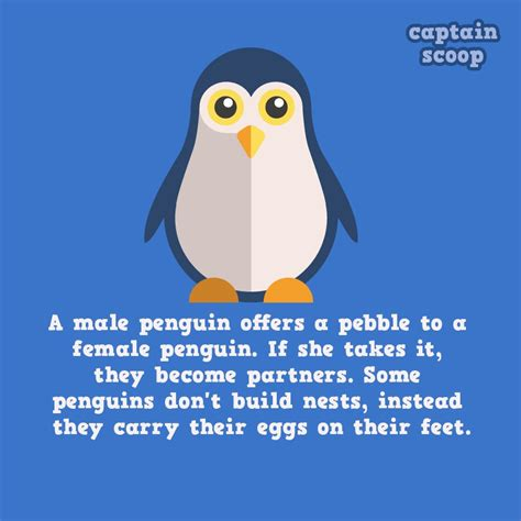 amazing facts     animals reckon talk