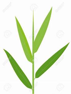 Bamboo leaves clipart - Clipground