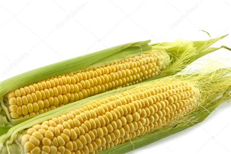 ear  corn stock photo  parfta