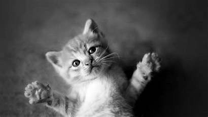 Cat Cats Animal Animals Wallpapers Kittens Desktop