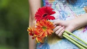 Pflanzenlexikon Mit Bild : blume gerbera bedeutung und herkunft der beliebten pflanze ~ Orissabook.com Haus und Dekorationen